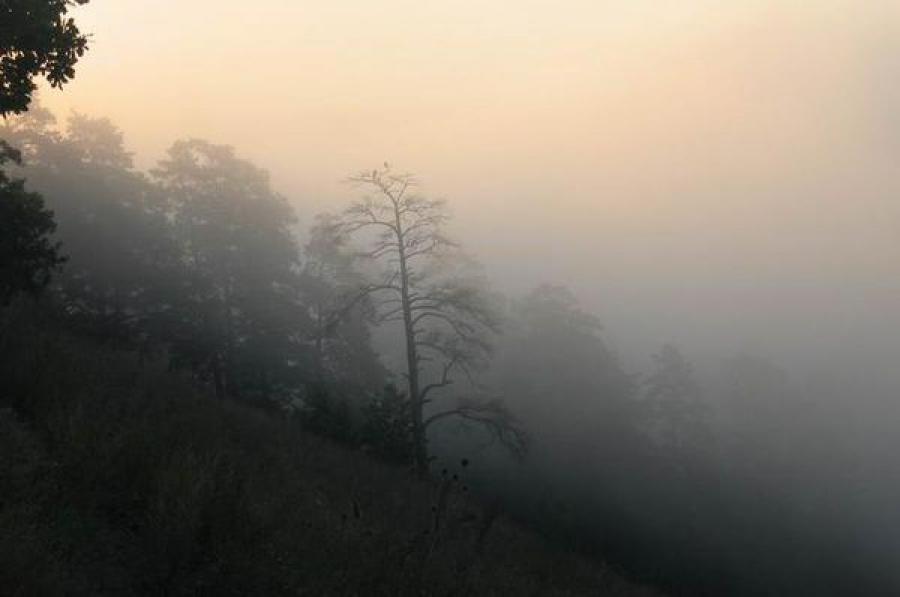 ГУ МЧС: ночью в Тверской области ожидается туман
