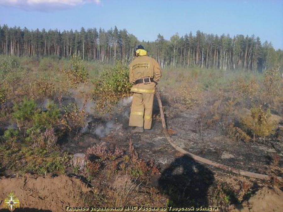 В Бологовском районе ликвидирован лесной пожар