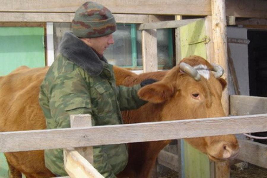 В 2014 году на поддержку сельхозпроизводителей направлено 1,448 млрд рублей