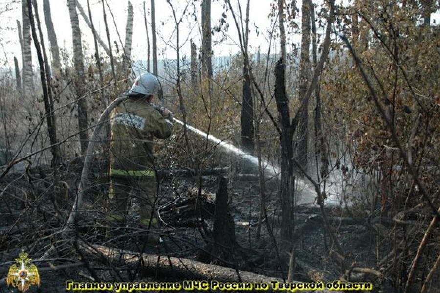 Режим ЧС в Тверской области введен из-за природных пожаров с 6 августа