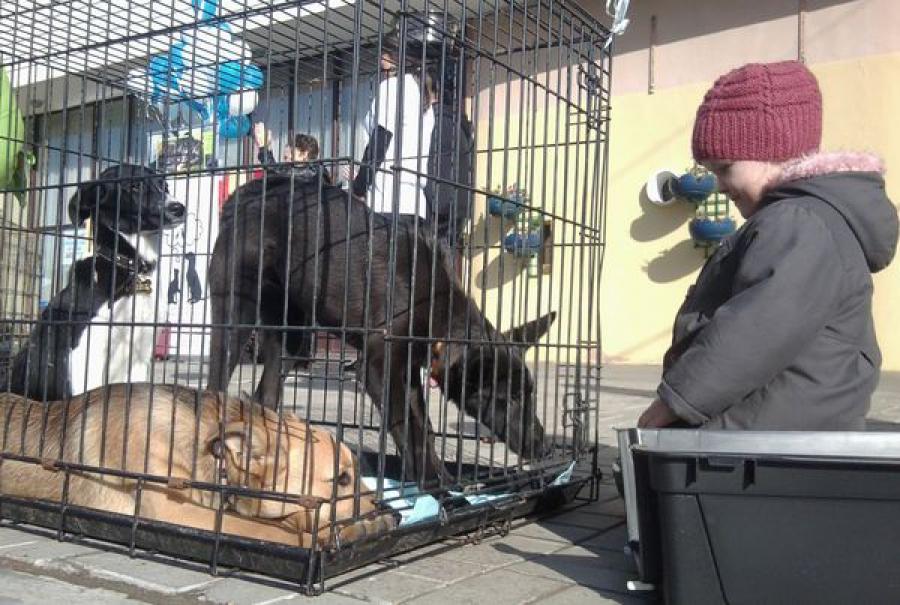 Доктор Айболит учил тверичей заботиться о животных