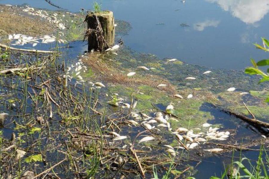 Гибель рыбы в реке Осуга стала основанием для возбуждения уголовного дела