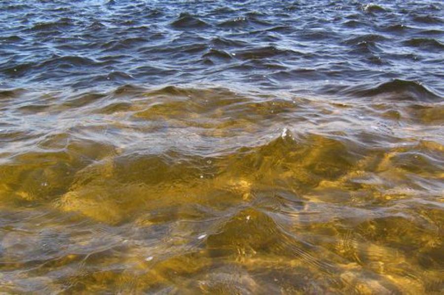 За слив неочищенных вод в ручей может последовать уголовная ответственность