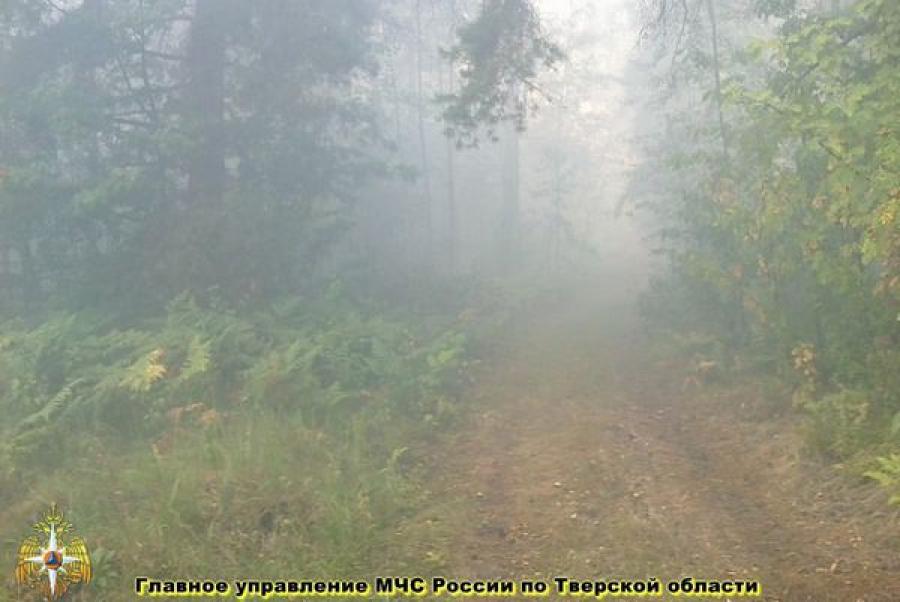 Лесной пожар в Конаковском районе тушат четыре вертолета и самолет-амфибия МЧС