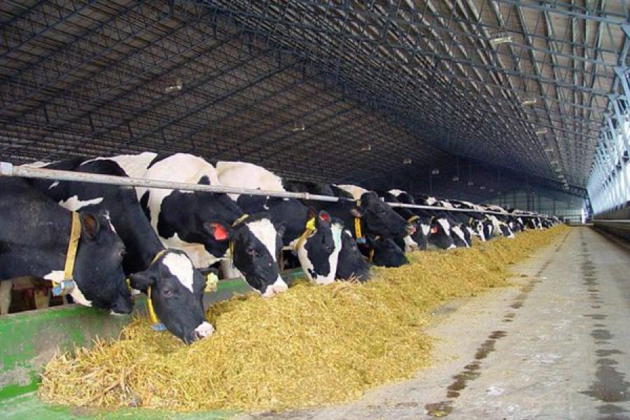 Сельское хозяйство в Бологовском районе сохраняет стабильность