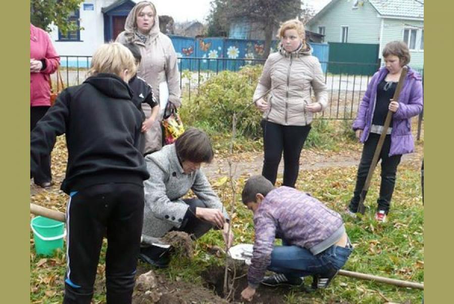 Старицие школьники высадили саженцы тополей, кленов и рябин