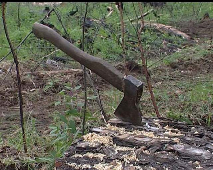 Черные лесорубы нанесли ущерб заказнику «Исток Волги» почти на 12 млн рублей