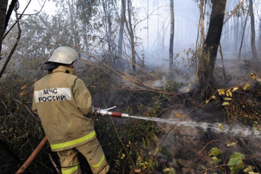 Губернатор оценил слаженные действия служб, занятых тушением пожара в Конаковском районе