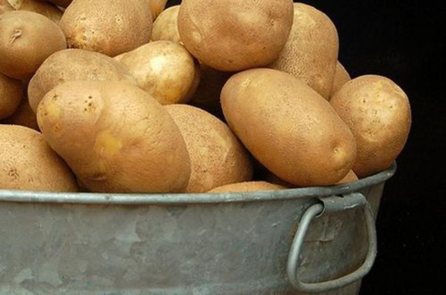 Хватит ли картофеля в Тверском регионе на зиму?