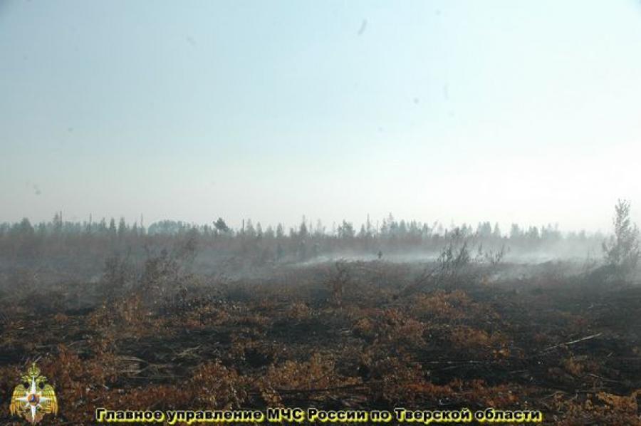 С начала лета в Тверской области возникло 207 природных пожаров