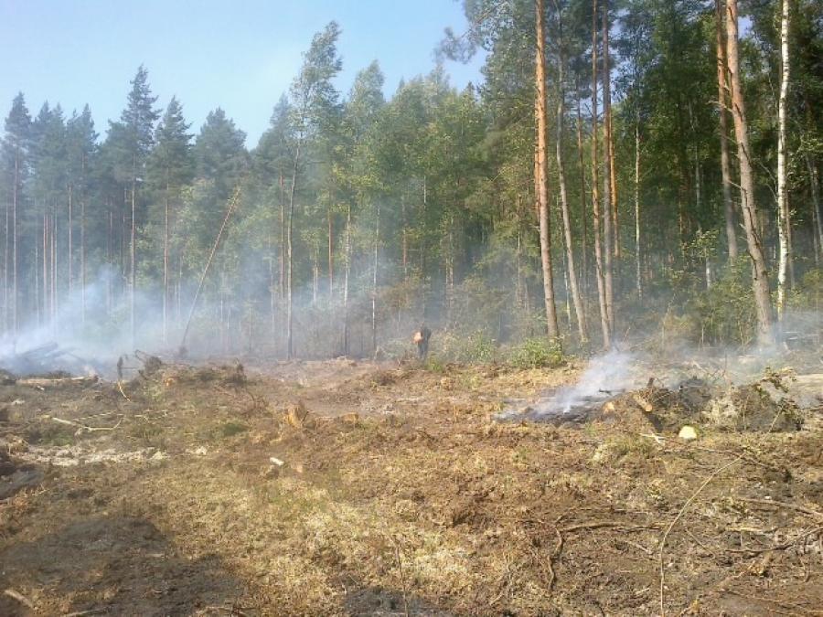 В Рамешковском районе горело около 10 га леса