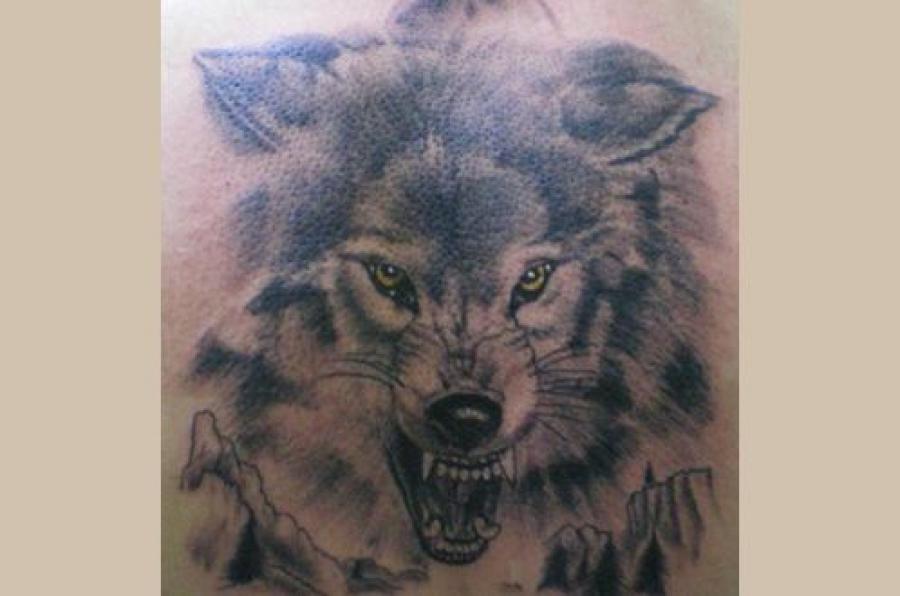В суд направлено дело банды «волков»