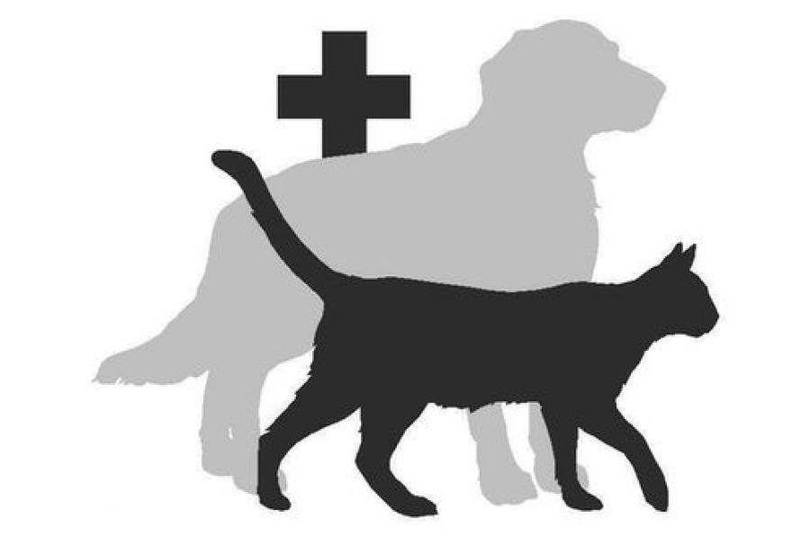 Тверские продавцы лекарств и товаров для животных получили штрафы