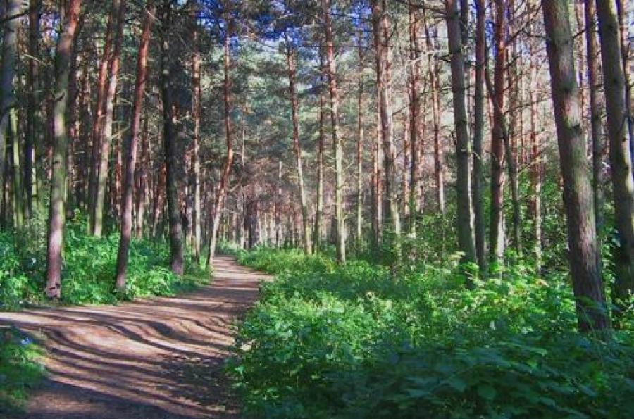О строительстве в Бобачевской роще речи не идет, сообщает Министерство природных ресурсов региона