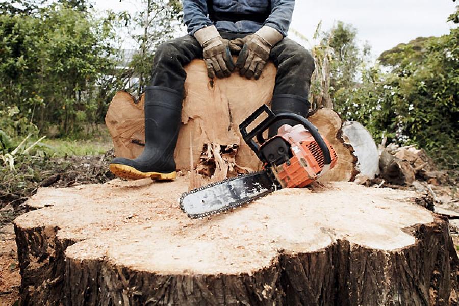 «Черный лесоруб» нанес ущерб почти на 10 млн рублей