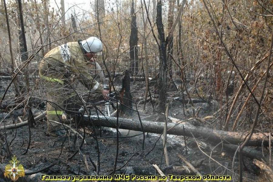 Лесные пожары в Тверской области: ситуация под контролем