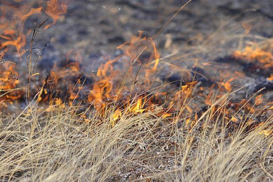 Около ста пожарных борются с палом травы в Конаковском районе