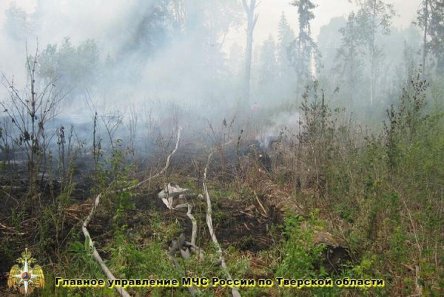 В четырех районах области горел лес на площади 7,7 гектара