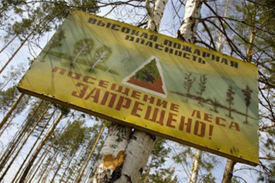 В трех районах Верхневолжья введены ограничения на посещение лесов