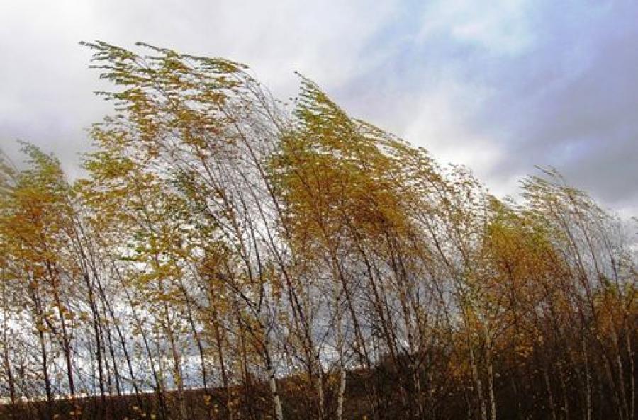 Сильный ветер ждут в Тверском регионе