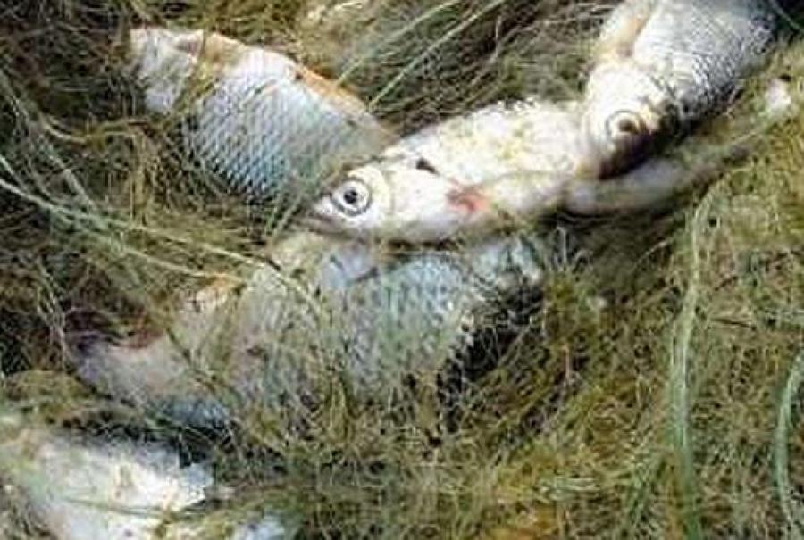 Госинспектор подозревается в получении взятки от рыбака-нарушителя