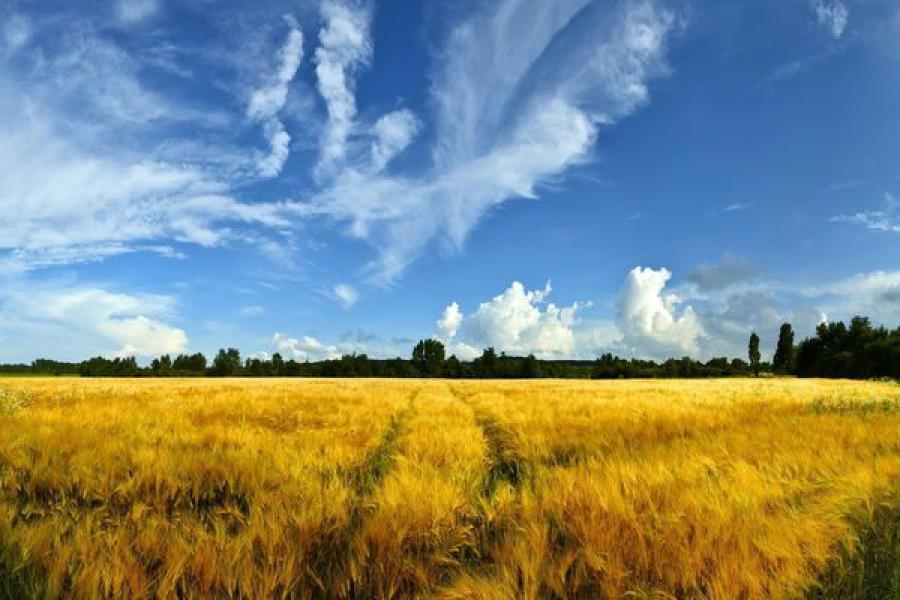 Кашинский район лидирует по посевным площадям и по посевам зерновых
