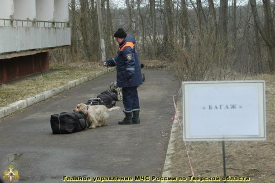В Тверской области демонстрируют навыки кинологи с собаками из разных регионов