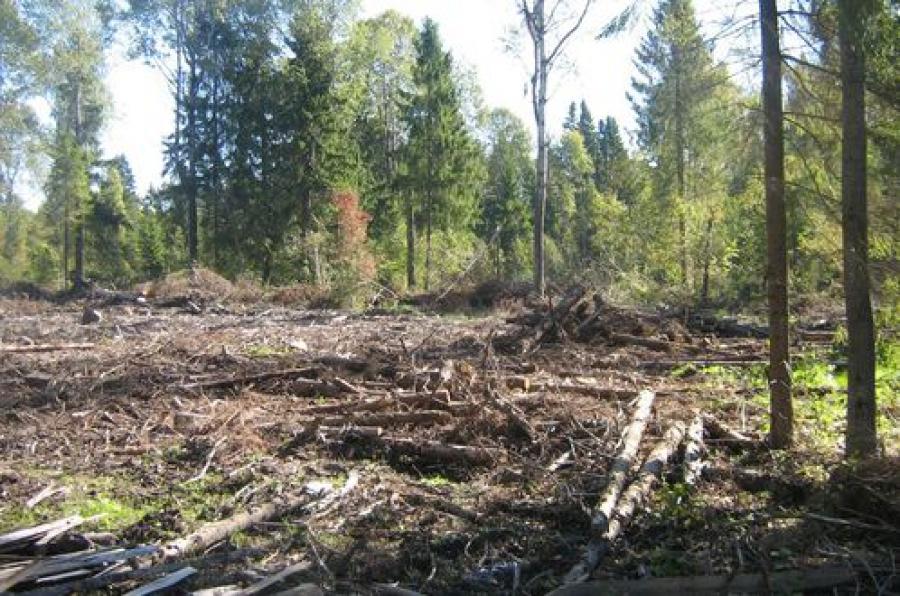 Председатель колхоза заплатит за нерасчищенные земли