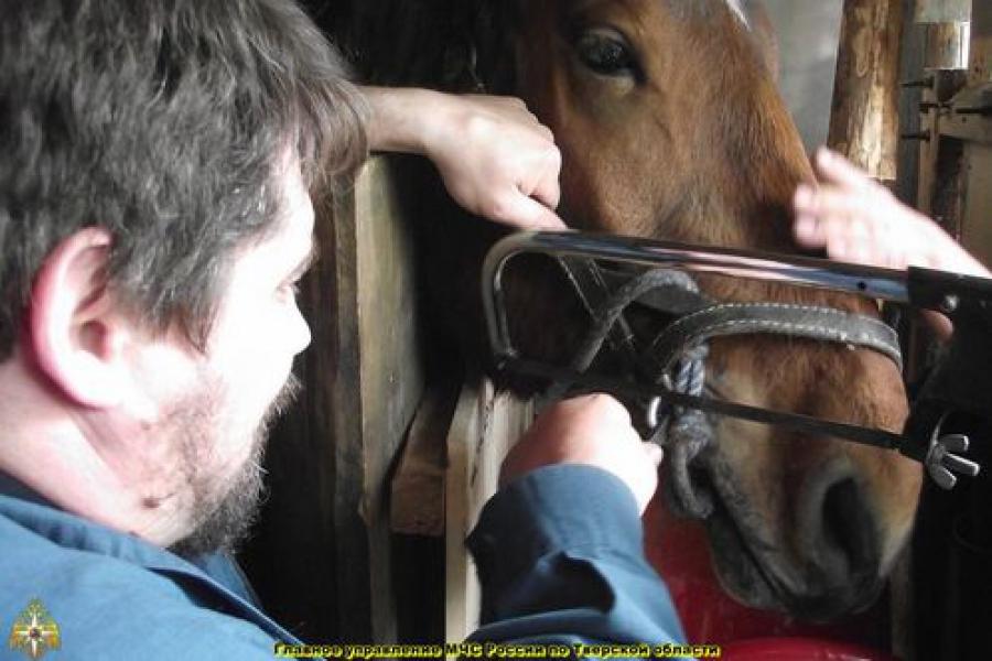 Тверские спасатели помогли лошади, случайно пострадавшей от опасного снаряжения