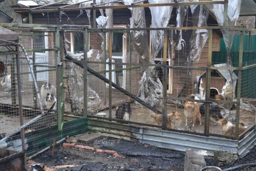 После пожара в питомнике шелти в Твери собакам требуется помощь