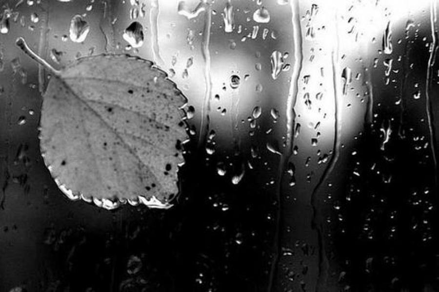 Сильный дождь ожидается в Тверском регионе