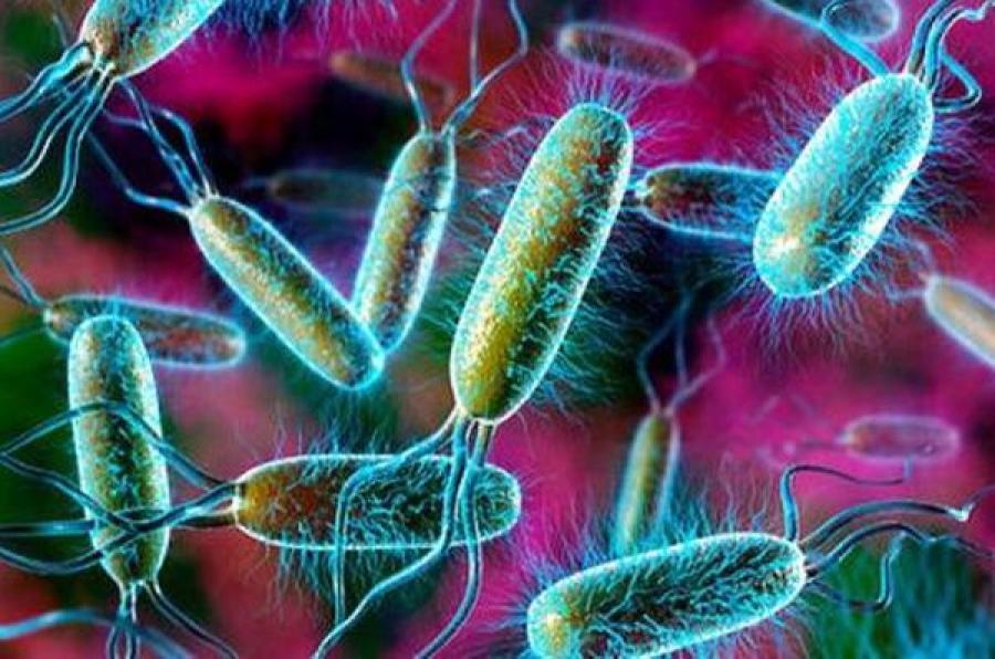 Опасные бактерии обнаружены в говядине для одной из тверских войсковых частей