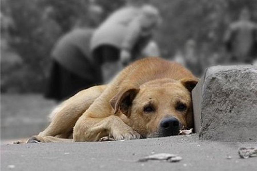 О приюте для бездомных собак опять заговорили в Твери