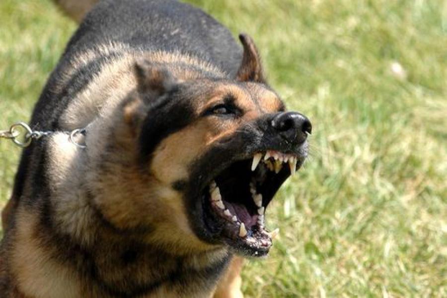 За собачий укус женщина взыскала 6 тысяч рублей