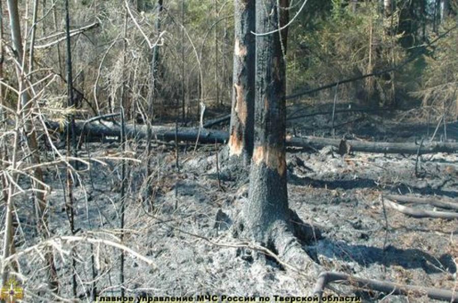 В Максатихинском районе горело 10 гектаров леса
