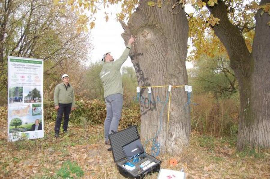 Национальный реестр старовозрастных деревьев пополнился тверскими дубами