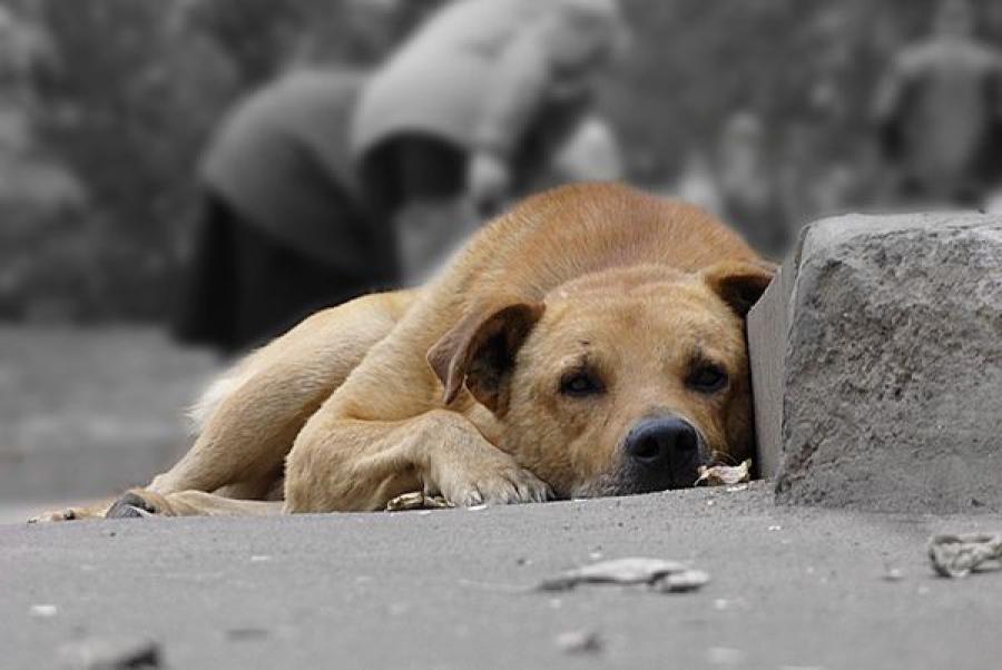 Вопросы о бездомных и домашних животных обсуждаются на региональном уровне
