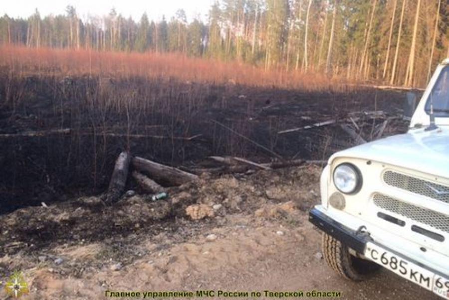 В Тверской области горит не только трава, но и лес