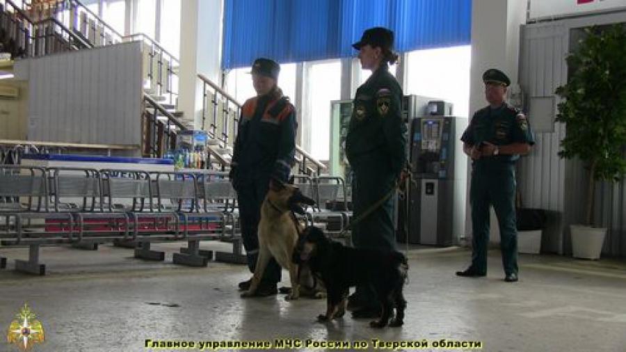Бомбу на автовокзале искали с собаками