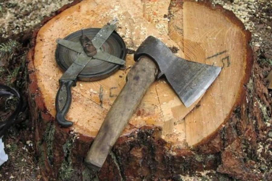 В Торопецком районе предприниматель незаконно нарубил леса на четверть миллиона