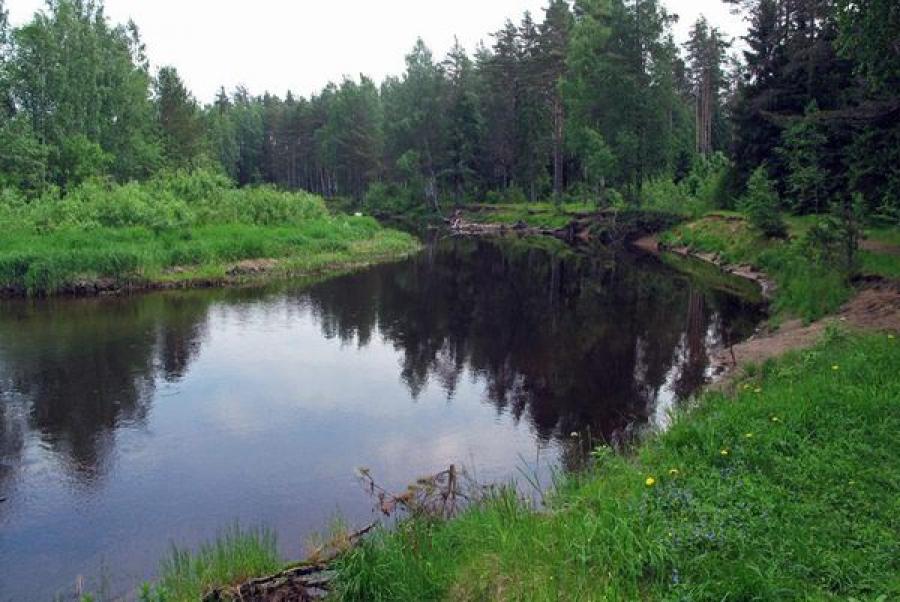 ООО «Вышний Волочек-Спецстрой» оштрафовано за потребительское отношение к природе
