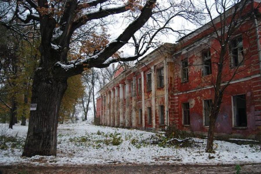 Определён возраст старейших тверских дубов, на очереди — сосна-долгожитель в Кашинском районе