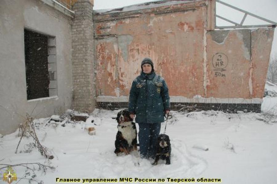 В Сахарово служебные собаки учились искать взрывчатку