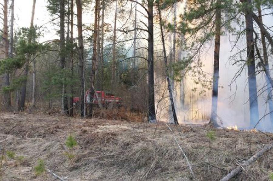 В районах Тверской области борются с лесными пожарами