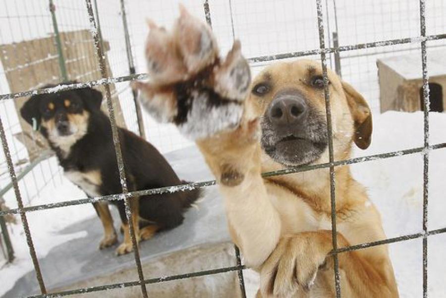 В Твери опять обещают построить пункт передержки безнадзорных животных