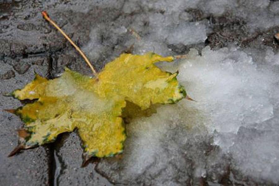 ГУ МЧС предупреждает: может выпасть мокрый снег