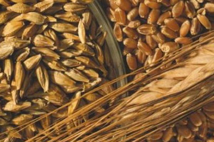В 2015 году на поддержку элитного семеноводства планируется направить 10,8 млн рублей
