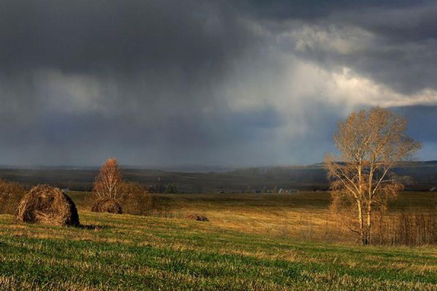 В Тверской области убраны лен, картофель, зерновые и зернобобовые