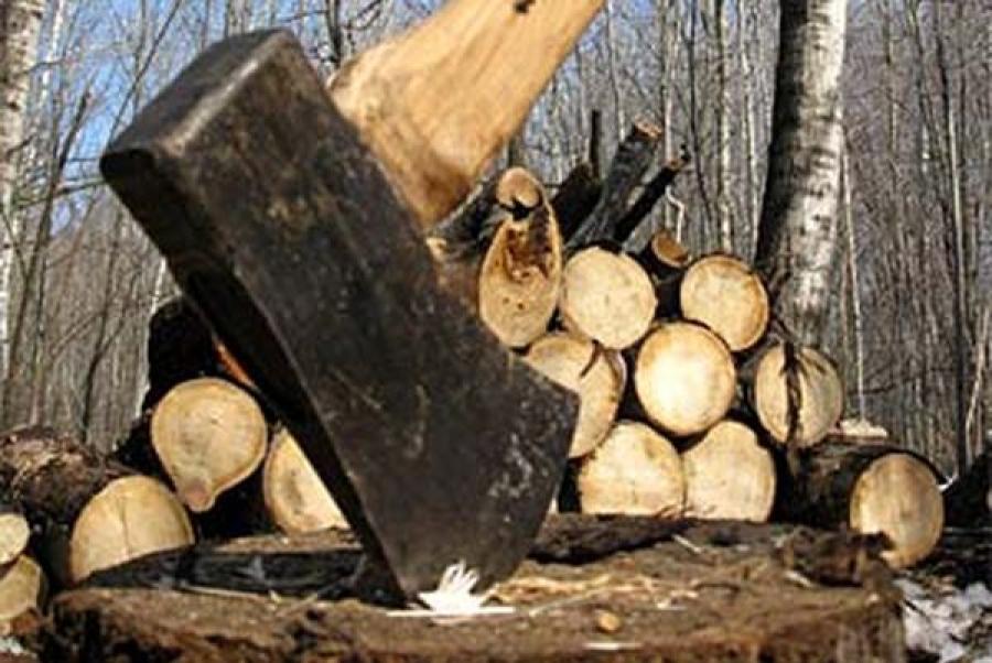 Житель Сандовского района незаконно рубил ольху и берёзу