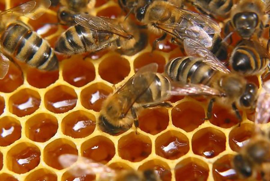 В Сандово пройдут слет пчеловодов и медовая ярмарка